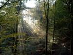 19.10.-Knaps-skov.jpg